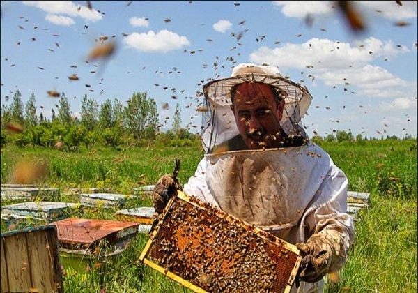 6 هزار تن عسل در کرمانشاه تولید میشود